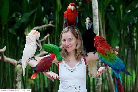 Парк птиц и рептилий на Бали (2011)