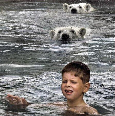 Бассейн с белыми медведями