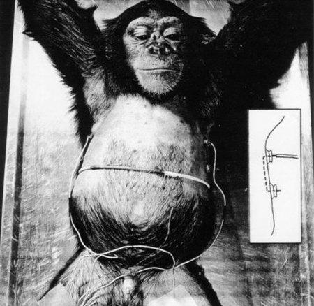 Шимпанзе-астронавт