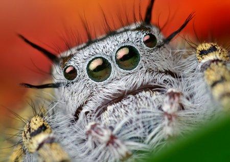 Макросъёмка насекомых от Thomas Shahan