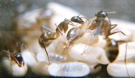 Рождение муравья