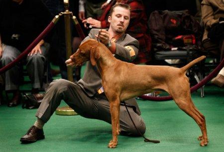 Выставка собак Westminster Kennel Club Dog Show