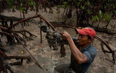 Как охотятся на крабов в Амазонке