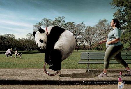 Прикольные животные в рекламе