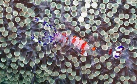 Великолепие подводного мира