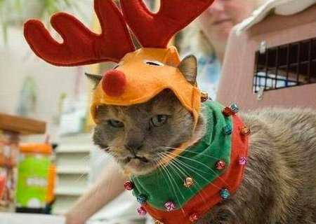 Неприветливые коты