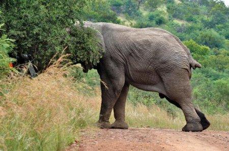 Никогда не злите слона!