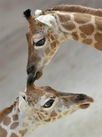 Животные в недельных новостях