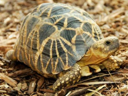 Жизнь черепах находится под угрозой