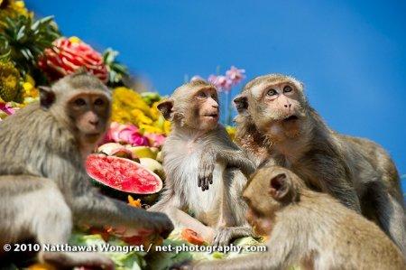 Фестиваль-угощение для обезьян