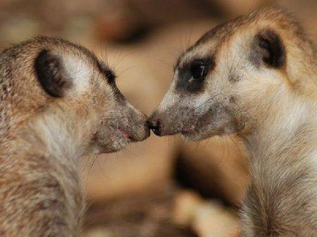 Пары животных и птиц от National Geographic.