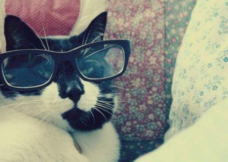 Кошки-очкарики