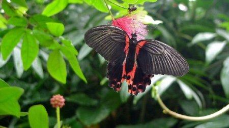 Ежегодная выставка бабочек в саду Уизли