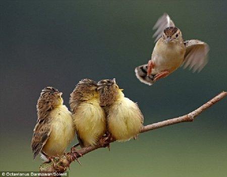 Кормление птенцов