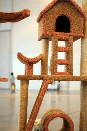 Выставка кошек «Кэтсбург 2011»