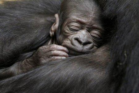 Фотографии животных за неделю (28 февраля—6 марта 2011)