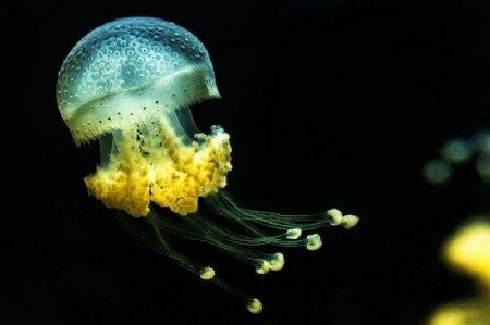 Великолепие медуз в фотографиях