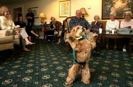 Забавные фото собак на задних лапах