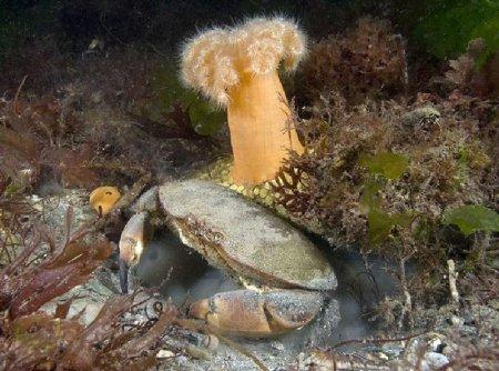 Морские животные в водах Великобритании