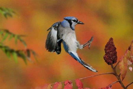 Движения в дикой природе