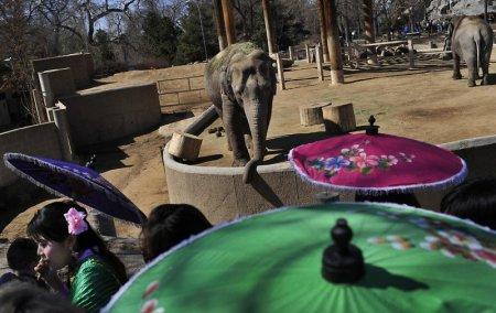 Празднование Национального дня тайского слона