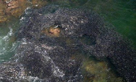 Берега Мексики оккупированы рыбой