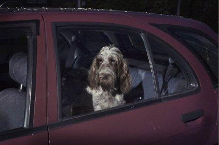 Собаке без хозяина тоскливо
