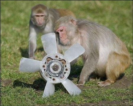 Любопытные обезьяны и автомобиль