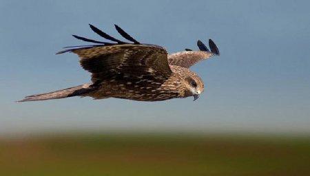 Захватывающие фотографии птиц в полете