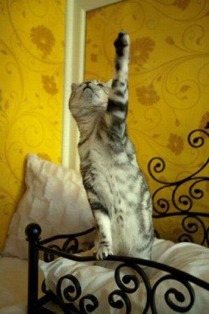 Пятизвездочный отель для любимых кошек