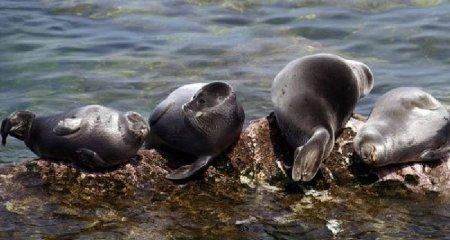 Подборка пресноводных млекопитающих