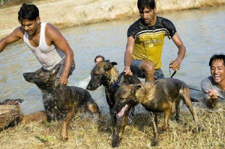 Собаки-коммандос в тренировочном центре Wolfgrey K9