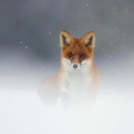 Фотографии дикой природы с конкурса Золотая Черепаха