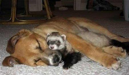 Трогательная дружба животных