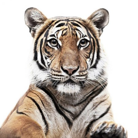 Снимки животных на паспорт