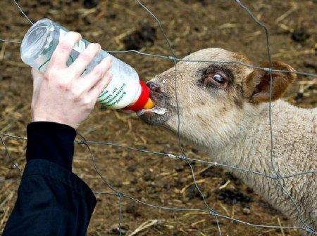 Классные фото животных
