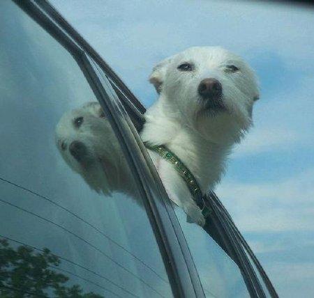 Смешные собаки при скорости 80 км/ч