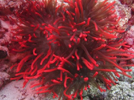 Красивые кораллы