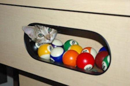 Кошки и бильярд