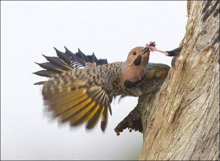 Битва за гнездо