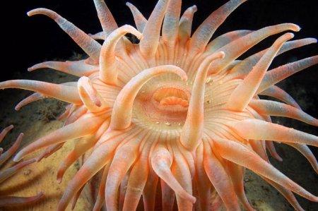 Красочный подводный мир от Александра Семенова