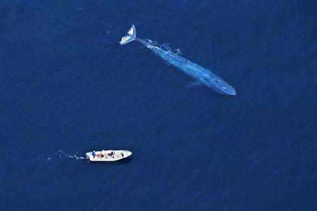 Самые дружелюбные киты