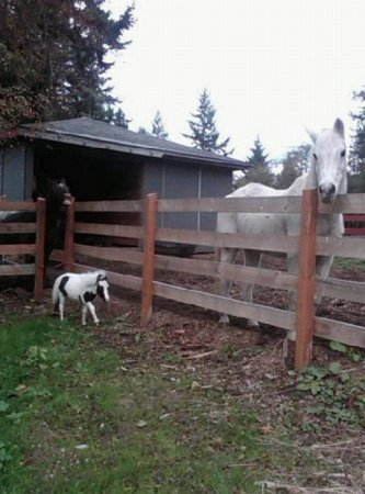 Самая маленькая лошадь в мире