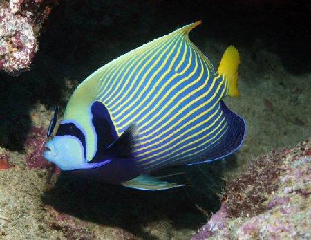 Подводные фотографии за 2011 год