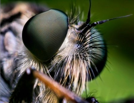 Разнообразные насекомые