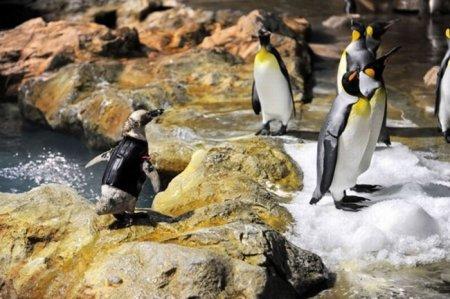 Пингвин без оперенья