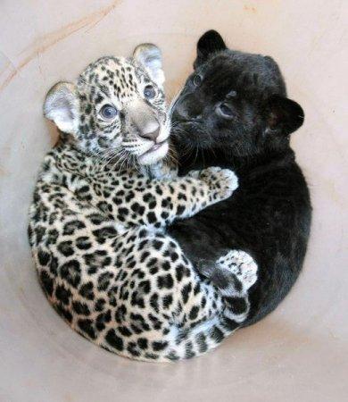Подборка прикольных животных