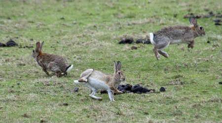 Кролики в полете