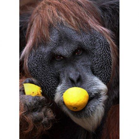 Обезьяны франкфуртского зоопарка