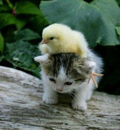 Позитивная подборка животных